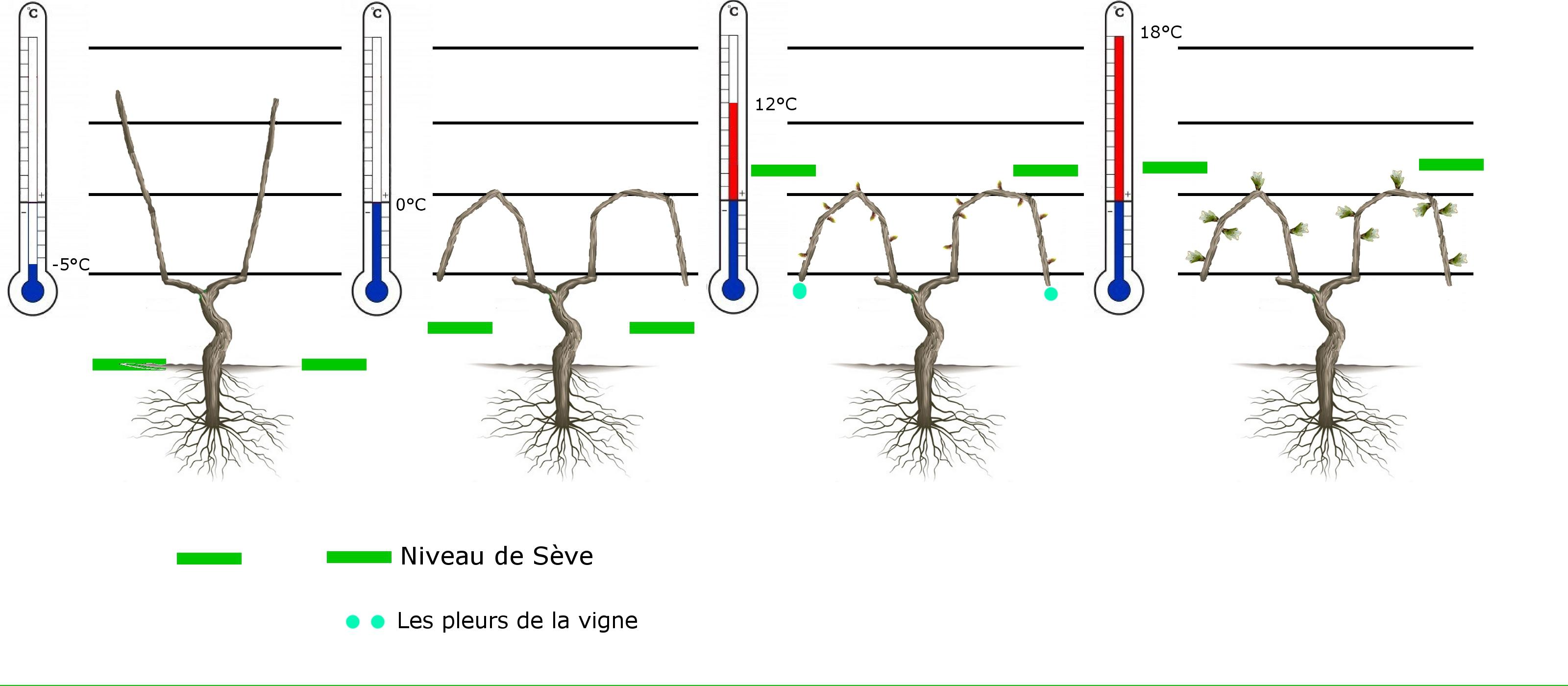 La vigne pleure vins d 39 alsace specht la vie d 39 un domaine - Comment planter une vigne ...